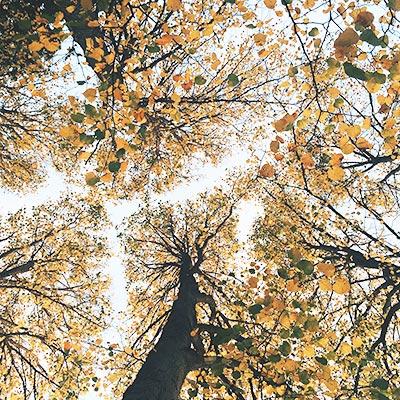 Sky and trees - PCG Barcelona